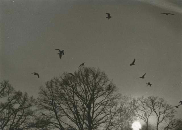 Silhouetted birds flying above silhouetted trees with setting sun by Erich Retzlaff (Aberystwyth University School of Art)